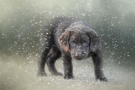 Her First Snow by Jai Johnson art print