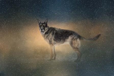 Winter Shepherd by Jai Johnson art print