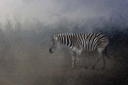 Zebra In A Snow Storm by Jai Johnson art print