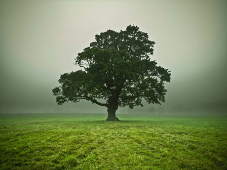 Misty Tree by Assaf Frank art print