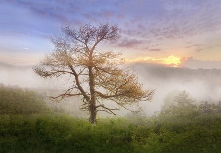 Misty Mountain Tree by Celebrate Life Gallery art print