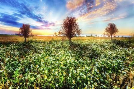 Wildflower Sunset by Celebrate Life Gallery art print