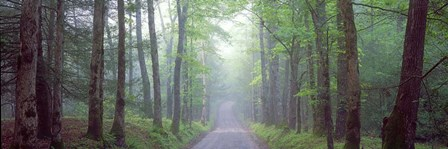 Through the Forest by Doug Cavanah art print