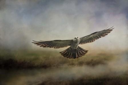 Mississippi Kite In The Marsh by Jai Johnson art print
