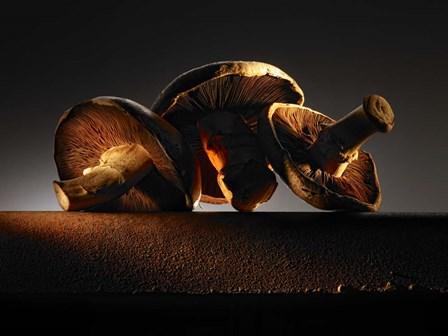 Mushroom On Ledge by Joe Felzman Photography art print