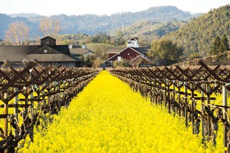 Napa Valley in Winter by Lance Kuehne art print