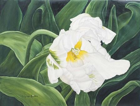 White Tulip Perth1 by Lily van Bienen art print