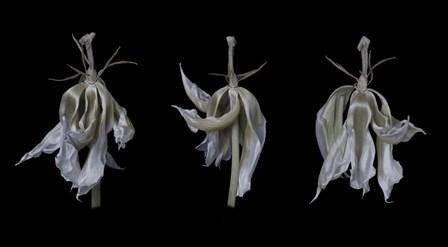Dancing Iris by Lori Hutchison art print