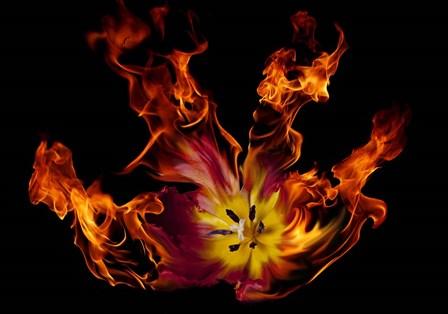 Flaming Tulip by Lori Hutchison art print