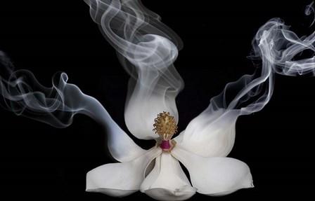 Smoking Magnolia by Lori Hutchison art print