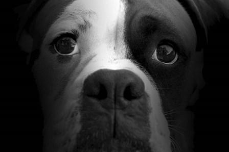 Boxer Pup by Lori Hutchison art print