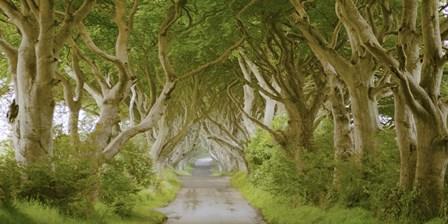The Dark Hedges, Ireland by Pangea Images art print
