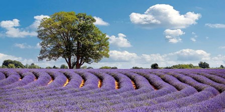 Lavender Field in Provence, France by Pangea Images art print