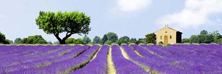 Lavender Fields, France by Pangea Images art print