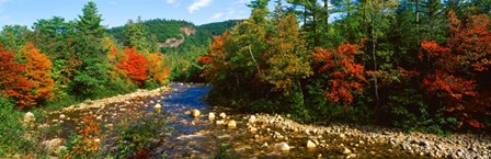River flowing through a Forest, Swift River, White Mountain National Forest, New Hampshire by Panoramic Images art print