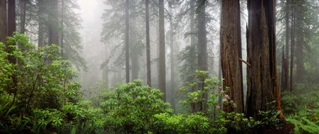Trees in Misty Forest by Panoramic Images art print