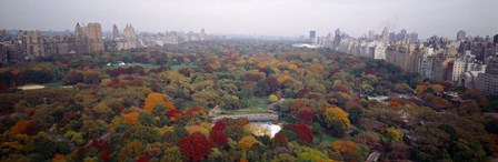 Trees in a Park, Central Park, Manhattan by Panoramic Images art print