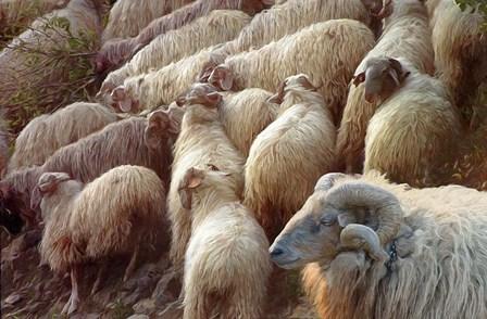Sheep Flock by Cora Niele art print