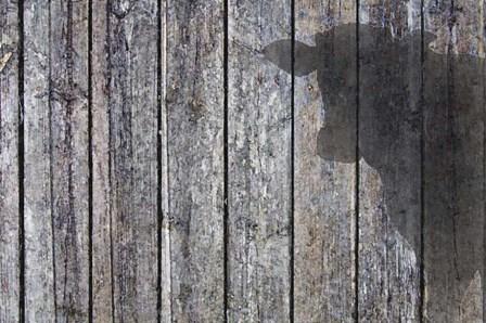 Cow Shadow by Murray Henderson Fine Art art print
