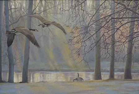 Geese An Pond by Rusty Frentner art print