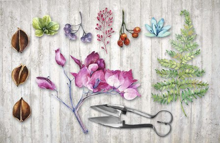 Botanica II by Tina Lavoie art print