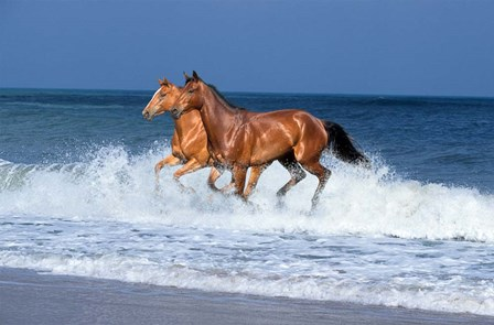 2 Horses Sea by Bob Langrish art print