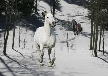 Snow Chase by Bob Langrish art print
