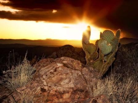 Sunset in the Desert V by David Drost art print