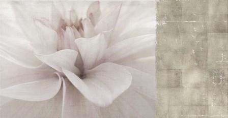 Softness by Posters International Studio art print