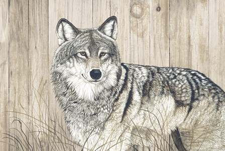 Wolf in Grass on Barn Board by Jacquie Vaux art print