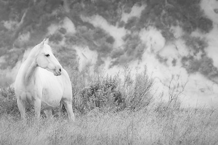 Misty Mare Crop by Lisa Cueman art print