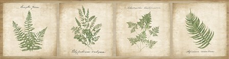 Vintage Ferns - 4 Image Panel by Wild Apple Portfolio art print
