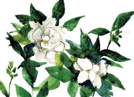 Bright Gardenias by Anne Tavoletti art print