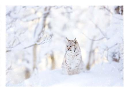 Snow lynx by PhotoINC Studio art print