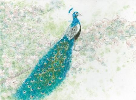 Spring Peacock I by James Wiens art print