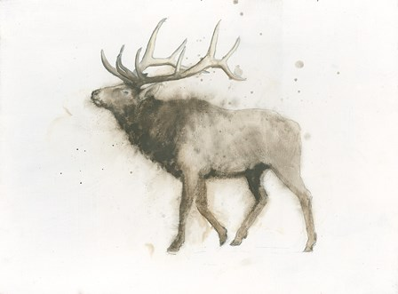 Elk by James Wiens art print