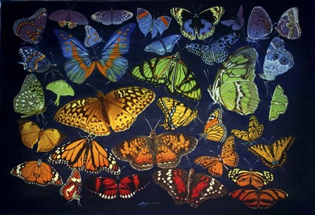 Butterflies by D. Rusty Rust art print