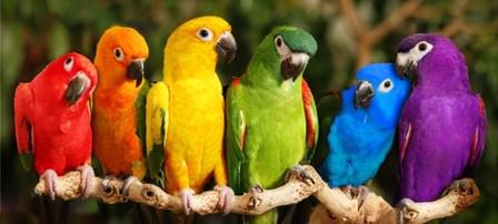 Rainbow Parrots by Mike Jones Photo art print