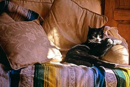Tuxedo Cat Sitting On Sofa by Vintage PI art print