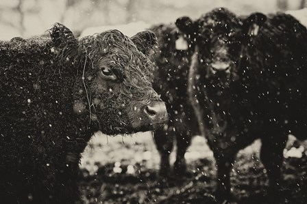 Its Snowing by Aledanda art print