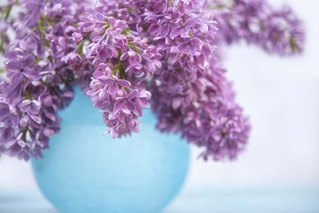 Lilacs in Blue Vase III by Cora Niele art print