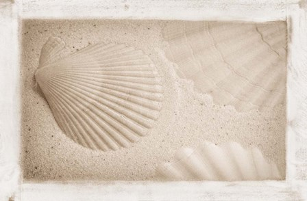 White Shells and Sand by Cora Niele art print