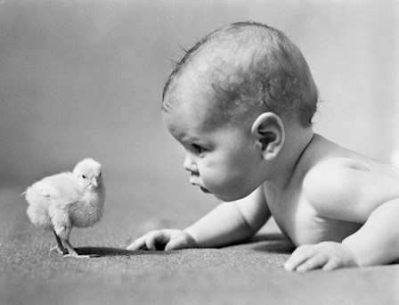 1930s Human Baby Face To Face With Baby Chick by Vintage PI art print