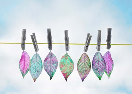 Leaves on Clothes Line by A.V. Art art print