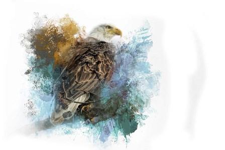 Expressions Bald Eagle by Jai Johnson art print