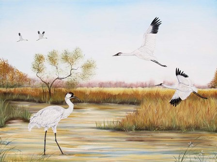 Whooping Cranes - A by Jean Plout art print