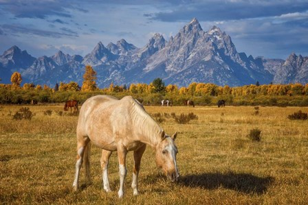 Breakfast in the Tetons by Darren White Photography art print