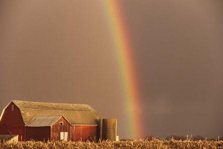 Rainbow by Stephanie Analah art print