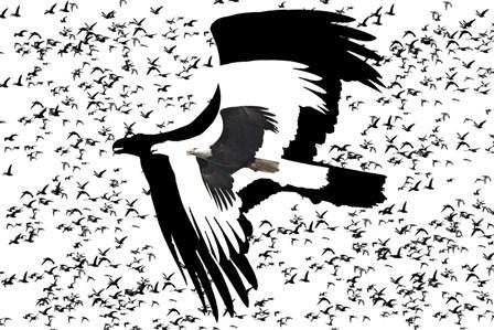 The Black Birds 2 by Ata Alishahi art print