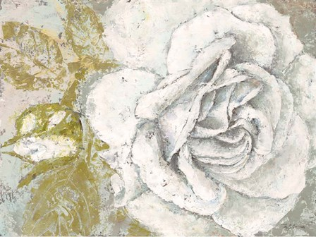 White Rose Blossom by Marie-Elaine Cusson art print